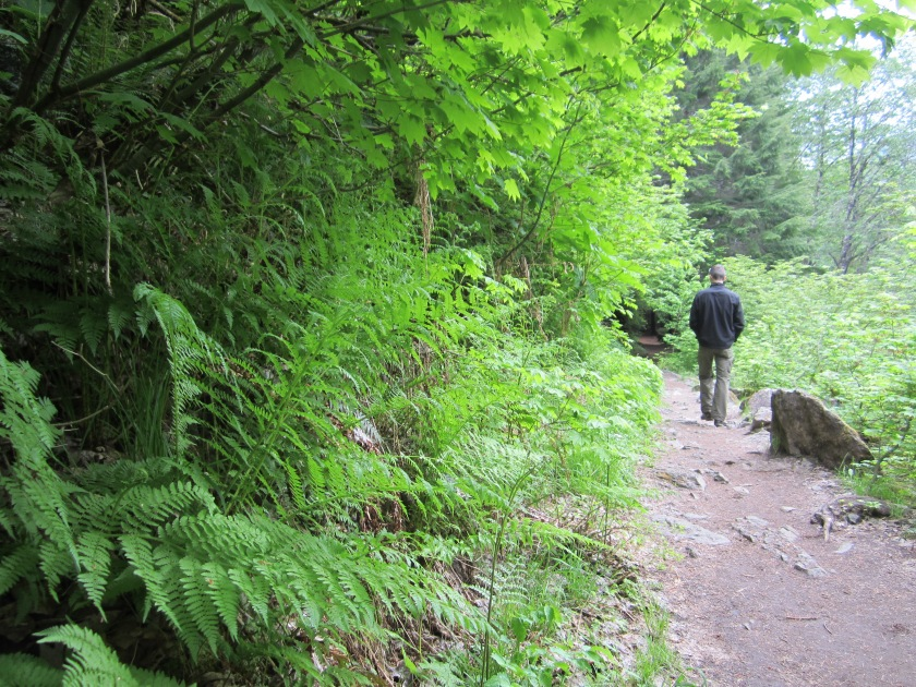 Grove of the Patriarchs is the most well-known and most walked old-growth trail. It is very accessible for all levels of physical ability and the NPS does interesting work with this trail. Lining the walk are information panels that give the grove a museum-like quality. I have never seen anything like it. [Image: Sarah Ruth Wilson]